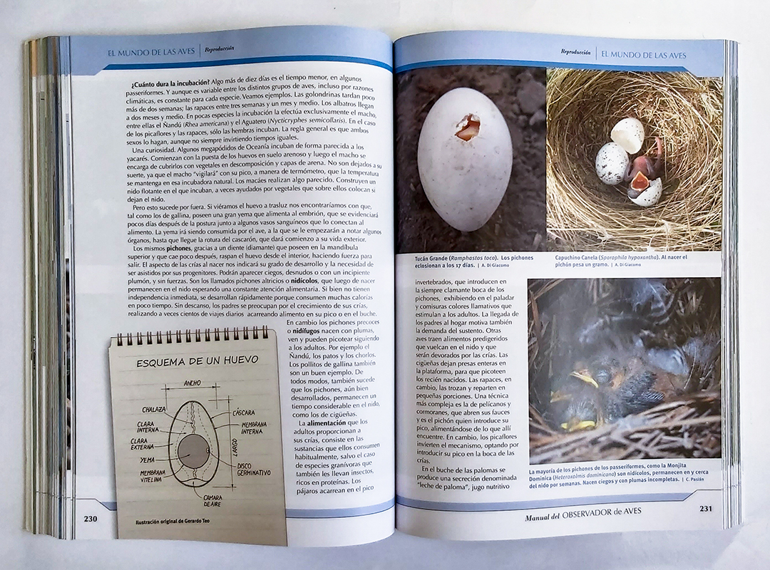 Esquema de un huevo y nidos de aves