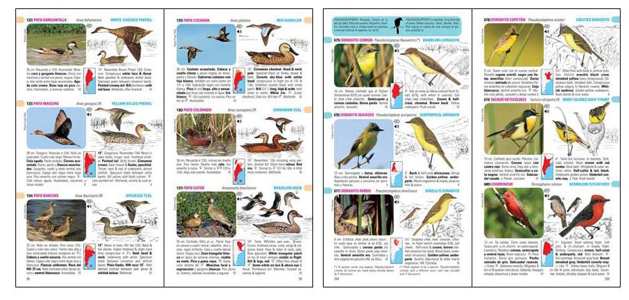 Interior libro guia de aves de la argentina