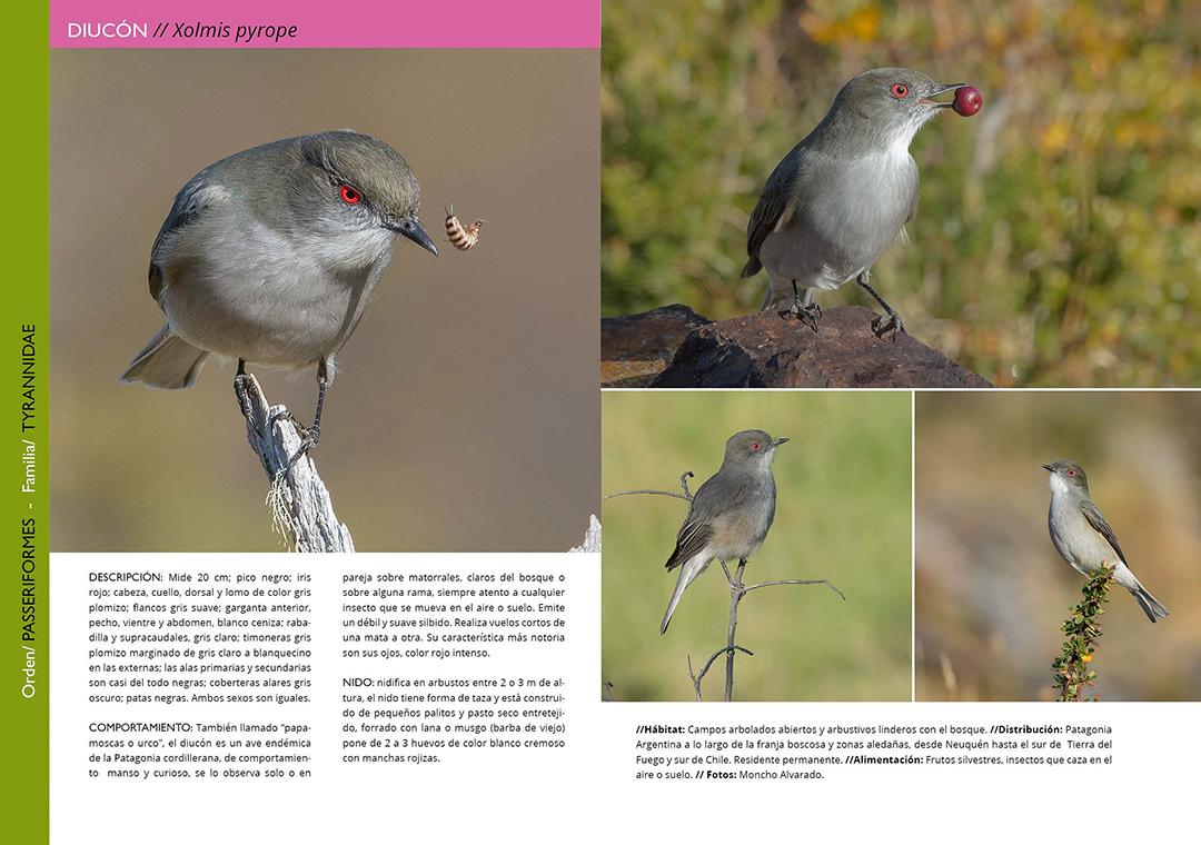 Libro Aves de Isla Grande de Tierra del Fuego