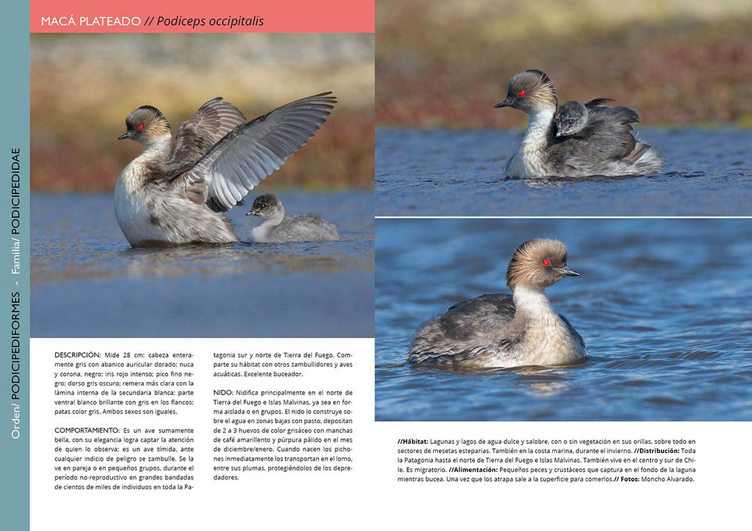 Libro Aves de Tierra del Fuego