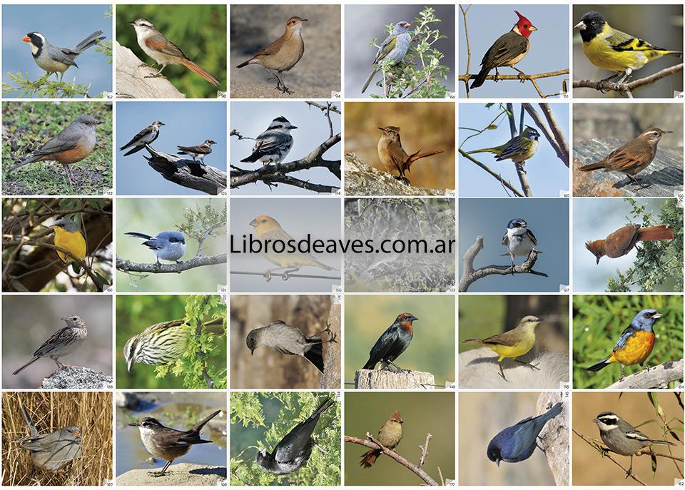 Figuritas Aves de la Argentina - Ecoval Ediciones