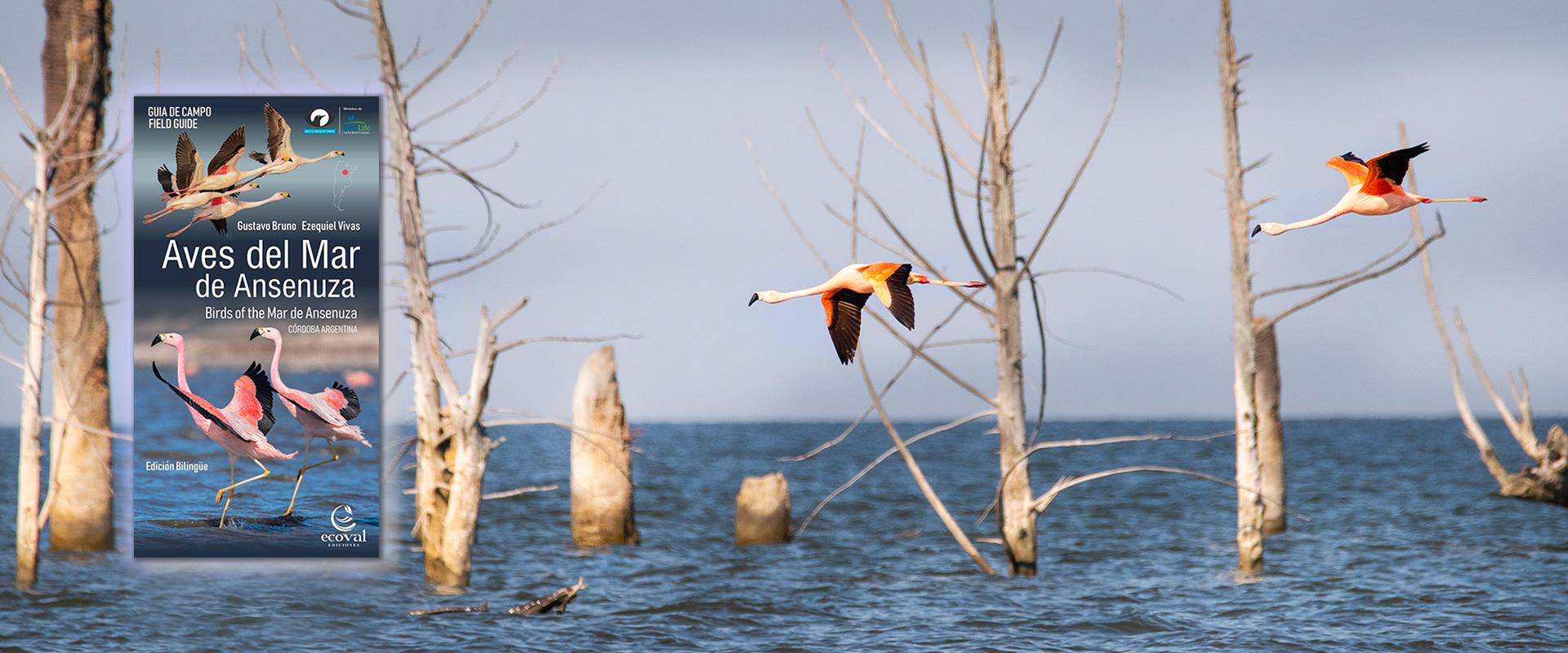 Aves Mar Chiquita