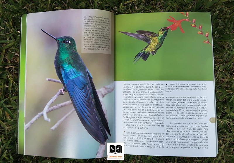 El libro de los Picaflores Hernan Povedano y Gabriel Maugeri